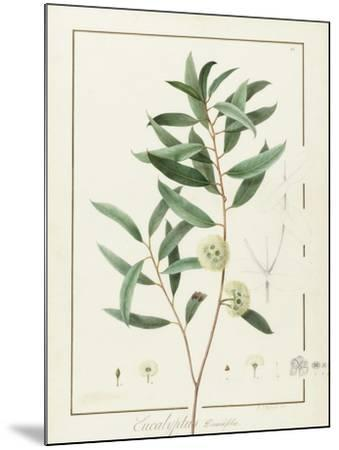 Eucalyptus Diversifolia, 1811 (W/C and Bodycolour over Traces of Graphite on Vellum)-Pierre Joseph Redoute-Mounted Giclee Print