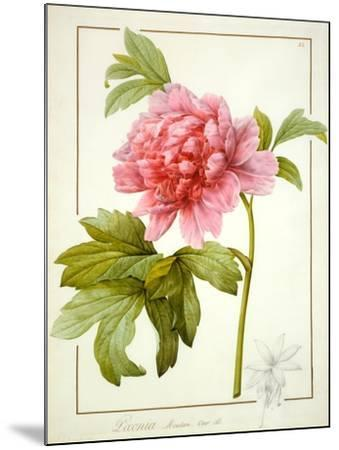 Paeonia Suffruticosa, 1812 (W/C with Gum Arabic over Traces of Graphite on Vellum)-Pierre Joseph Redoute-Mounted Giclee Print