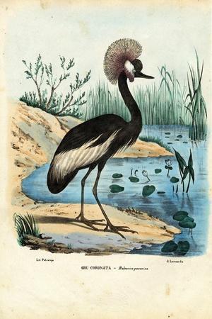 Black-Crowned Crane, 1863-79-Raimundo Petraroja-Stretched Canvas Print