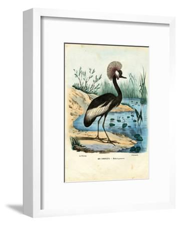 Black-Crowned Crane, 1863-79-Raimundo Petraroja-Framed Giclee Print