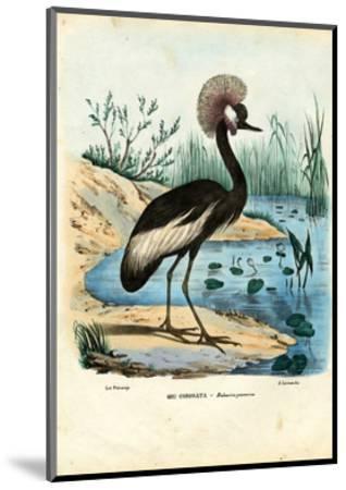 Black-Crowned Crane, 1863-79-Raimundo Petraroja-Mounted Giclee Print