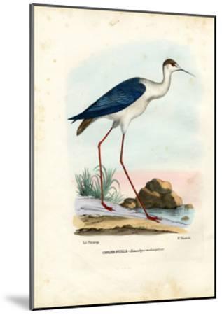 Black-Winged Stilt, 1863-79-Raimundo Petraroja-Mounted Giclee Print