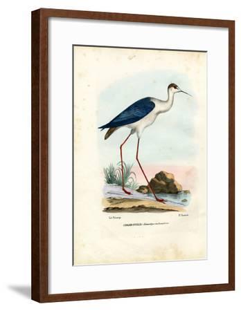 Black-Winged Stilt, 1863-79-Raimundo Petraroja-Framed Giclee Print