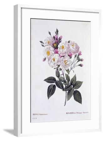 Rosa Noisettiana, Published 1824-26-Pierre Joseph Redoute-Framed Giclee Print