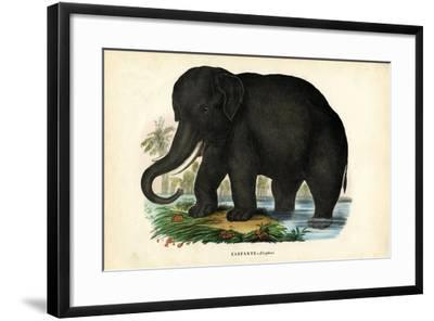Asian Elephant, 1863-79-Raimundo Petraroja-Framed Giclee Print