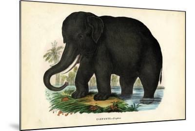 Asian Elephant, 1863-79-Raimundo Petraroja-Mounted Giclee Print