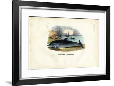 Common Dolphin, 1863-79-Raimundo Petraroja-Framed Giclee Print