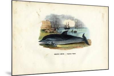 Common Dolphin, 1863-79-Raimundo Petraroja-Mounted Giclee Print