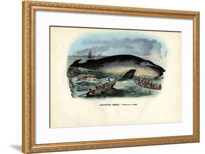 Humpback Whale, 1863-79-Raimundo Petraroja-Framed Giclee Print