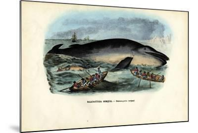 Humpback Whale, 1863-79-Raimundo Petraroja-Mounted Giclee Print