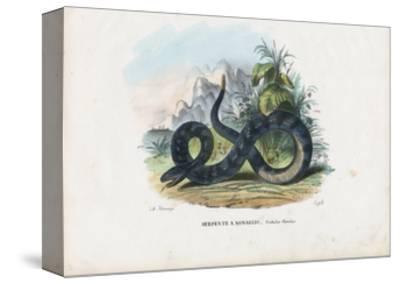 Timber Rattlesnake, 1863-79-Raimundo Petraroja-Stretched Canvas Print