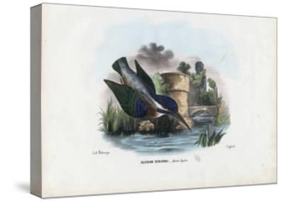 Common Kingfisher, 1863-79-Raimundo Petraroja-Stretched Canvas Print