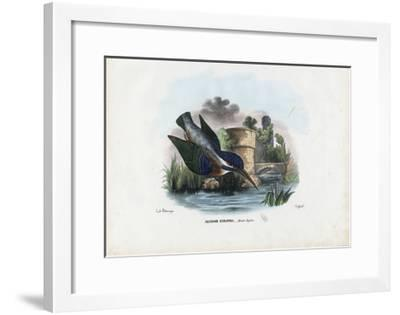 Common Kingfisher, 1863-79-Raimundo Petraroja-Framed Giclee Print