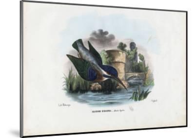 Common Kingfisher, 1863-79-Raimundo Petraroja-Mounted Giclee Print