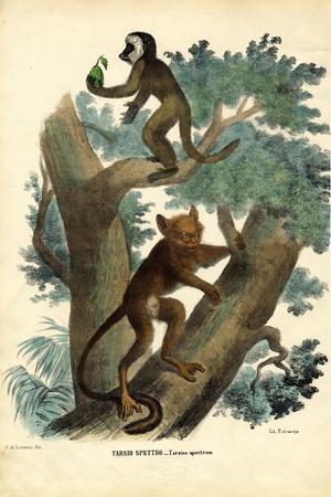 Tarsier, 1863-79-Raimundo Petraroja-Stretched Canvas Print