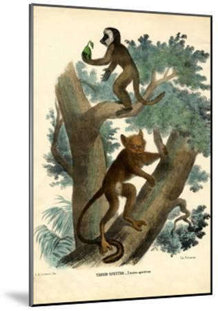Tarsier, 1863-79-Raimundo Petraroja-Mounted Giclee Print