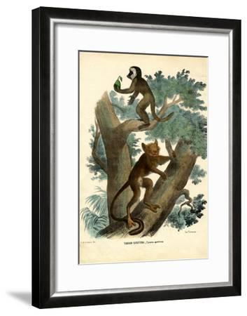 Tarsier, 1863-79-Raimundo Petraroja-Framed Giclee Print