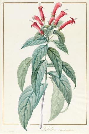 Lobelia Surinamensis-Pierre Joseph Redoute-Framed Giclee Print