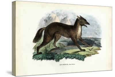 Golden Jackal, 1863-79-Raimundo Petraroja-Stretched Canvas Print