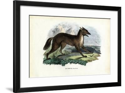 Golden Jackal, 1863-79-Raimundo Petraroja-Framed Giclee Print