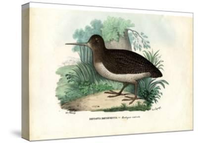 Eurasian Woodcock, 1863-79-Raimundo Petraroja-Stretched Canvas Print