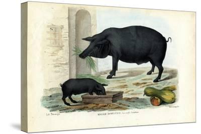 Domestic Pig, 1863-79-Raimundo Petraroja-Stretched Canvas Print