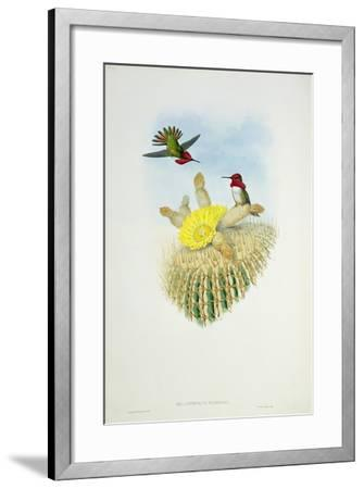Humming Bird, Engraved by Walter and Cohn- Richter & Gould-Framed Giclee Print