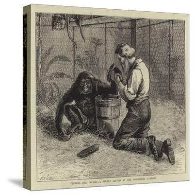 Tending the Invalid, a Recent Sketch at the Zoological Gardens-Samuel Edmund Waller-Stretched Canvas Print