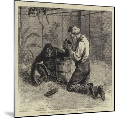 Tending the Invalid, a Recent Sketch at the Zoological Gardens-Samuel Edmund Waller-Mounted Giclee Print