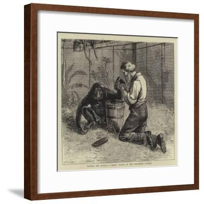 Tending the Invalid, a Recent Sketch at the Zoological Gardens-Samuel Edmund Waller-Framed Giclee Print