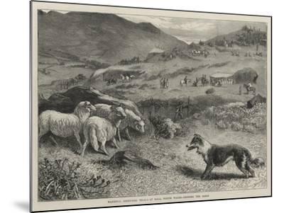 National Sheep-Dog Trials at Bala, North Wales, Penning the Sheep-Samuel Edmund Waller-Mounted Giclee Print