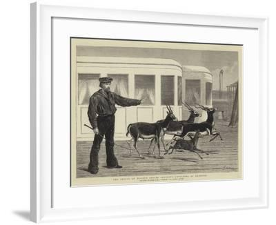The Prince of Wales's Indian Presents, Antelopes at Exercise-Samuel Edmund Waller-Framed Giclee Print