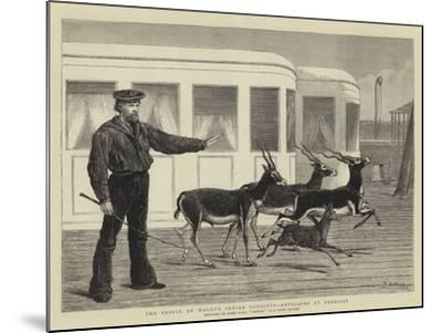The Prince of Wales's Indian Presents, Antelopes at Exercise-Samuel Edmund Waller-Mounted Giclee Print