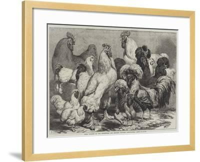 Prize Poultry at the Birmingham and Midland Counties Agricultural Show-Samuel John Carter-Framed Giclee Print