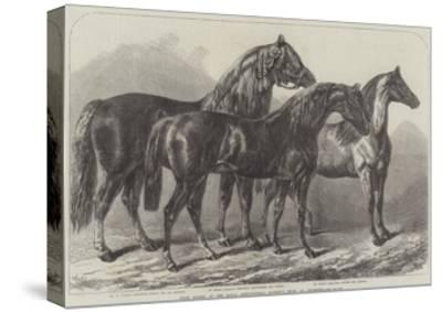 Prize Horses at the Royal Agricultural Society's Show, at Leicester-Samuel John Carter-Stretched Canvas Print