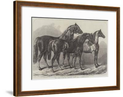 Prize Horses at the Royal Agricultural Society's Show, at Leicester-Samuel John Carter-Framed Giclee Print