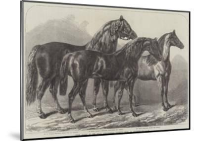Prize Horses at the Royal Agricultural Society's Show, at Leicester-Samuel John Carter-Mounted Giclee Print
