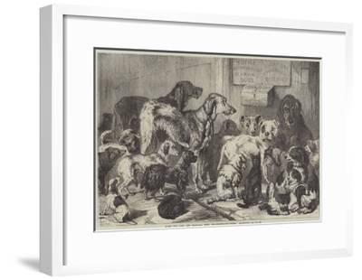 Home for Lost and Starving Dogs, Hollingsworth-Street, Islington-Samuel John Carter-Framed Giclee Print