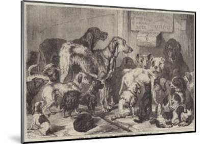 Home for Lost and Starving Dogs, Hollingsworth-Street, Islington-Samuel John Carter-Mounted Giclee Print