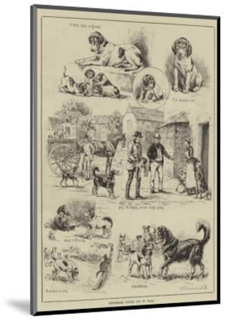 Cottesmore Puppies Put to Walk-S^t^ Dadd-Mounted Giclee Print