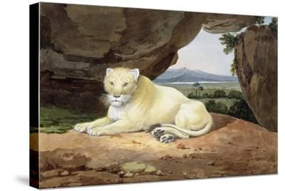 Lioness-Samuel Howitt-Stretched Canvas Print
