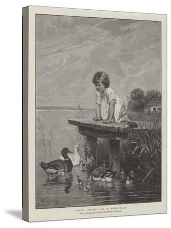 Young Ducks-Robert Julius Beyschlag-Stretched Canvas Print