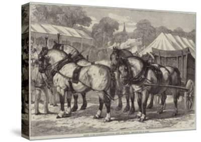 Meeting of the Lincolnshire Agricultural Society at Sleaford, First-Prize Team of Horses-Samuel John Carter-Stretched Canvas Print