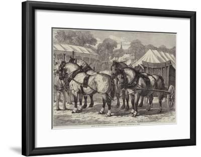 Meeting of the Lincolnshire Agricultural Society at Sleaford, First-Prize Team of Horses-Samuel John Carter-Framed Giclee Print