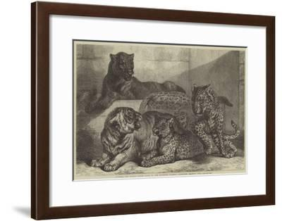 Leopards and Tigress Lately Added to the Zoological Society's Collection, Regent's Park-Samuel John Carter-Framed Giclee Print
