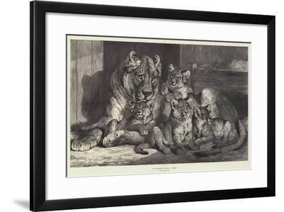 Lioness and Cubs-Samuel John Carter-Framed Giclee Print