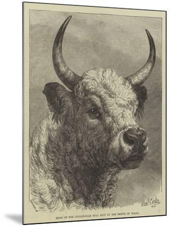 Head of the Chillingham Bull Shot by the Prince of Wales-Samuel John Carter-Mounted Giclee Print
