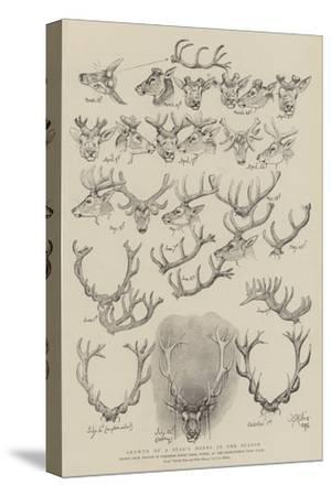 Growth of a Stag's Horns in One Season-John Everett Millais-Stretched Canvas Print
