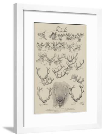 Growth of a Stag's Horns in One Season-John Everett Millais-Framed Giclee Print