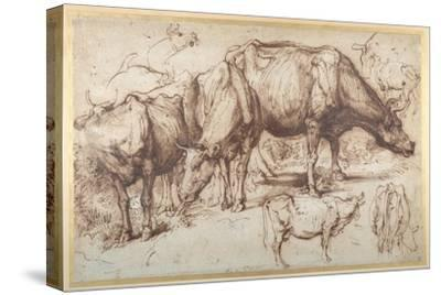 Cattle in Pasture, C.1618-20-Sir Anthony Van Dyck-Stretched Canvas Print